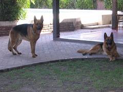 Los Guardianes de la casa