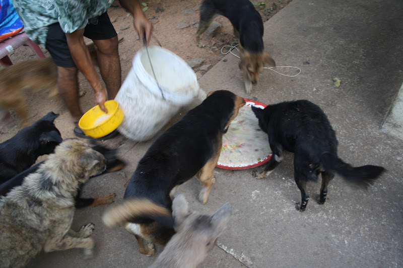 Dogs Started Fighting Over Food