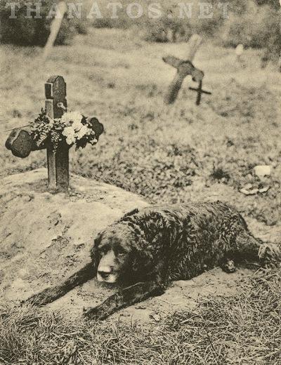 Thanatos.net - Master's Grave - Trofast på graven