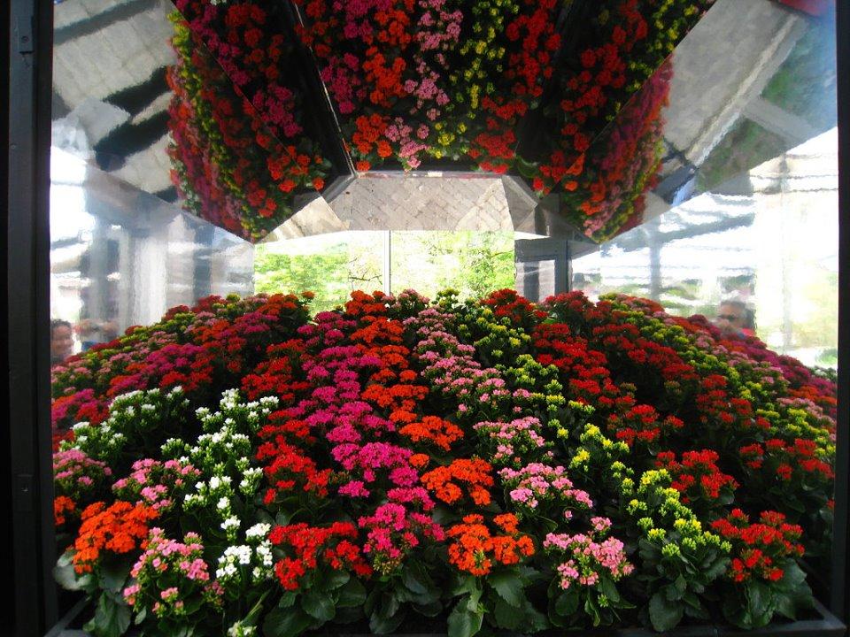 flores coloridas jardim:Ciclos da Alma: Verão e Inverno de coração!