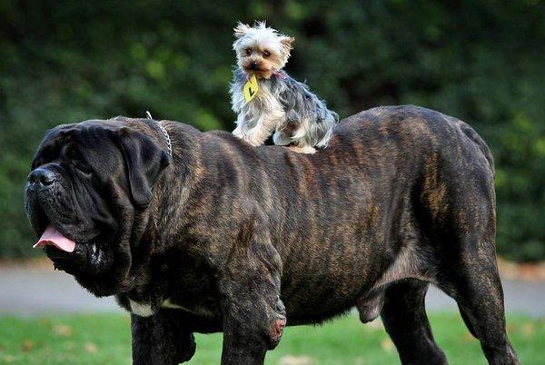 hund dominans