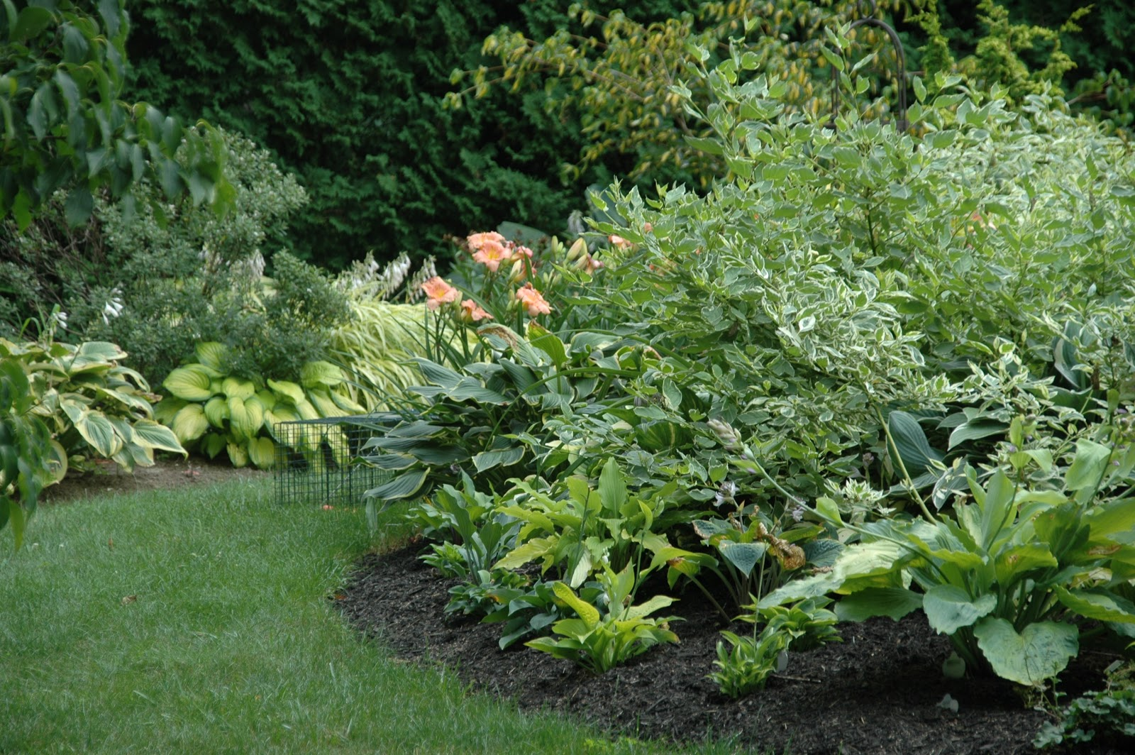 Etonnant I Have Discovered That Buying Plants Online Is Very Satisfying. First, You  Have Unlimited Online Resources To Choose From Because Most Garden Nurseries  Have ...