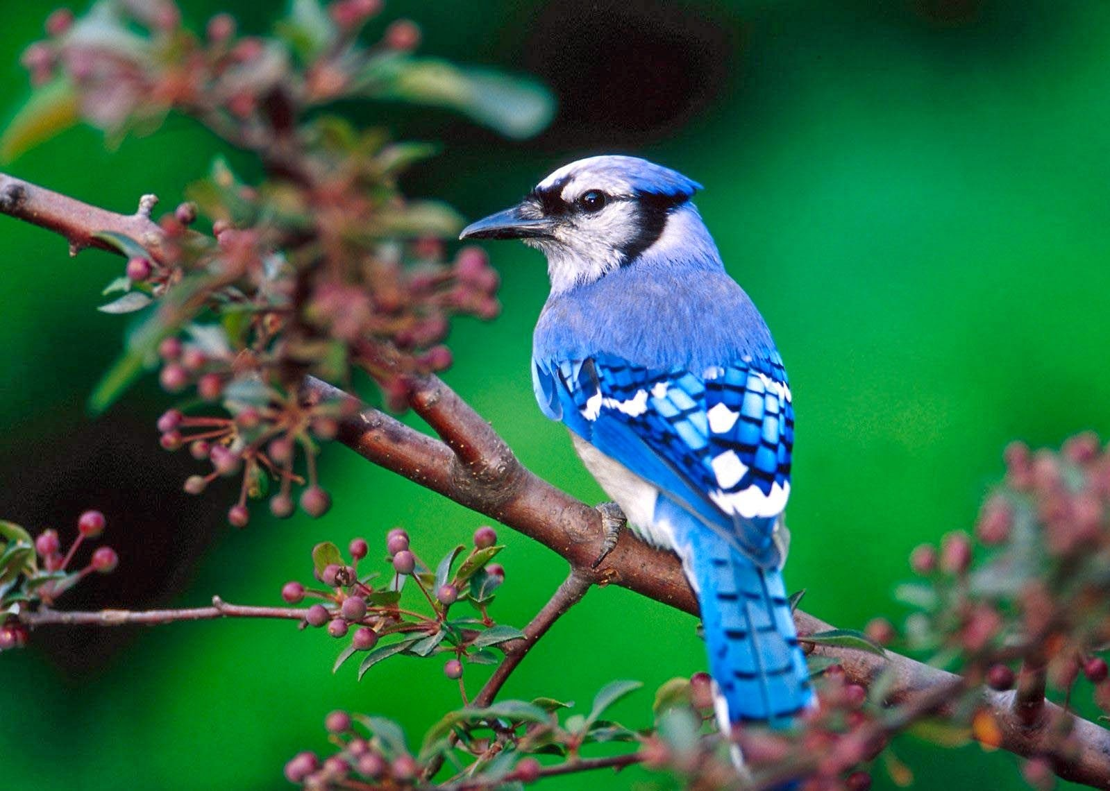 wildlife birds wallpapers for kids pet birds pictures hd my