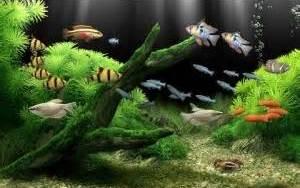 Gambar Foto Jenis Macam Nama Ikan Hias Air Tawar Freewaremini