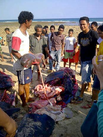 População da ilha retira partes das baleias para o consumo.