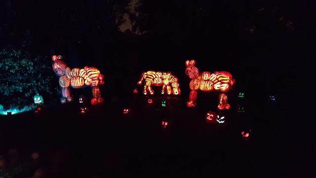 Zebra Jack O'Lanterns