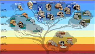 شجرة السلالات البشرية