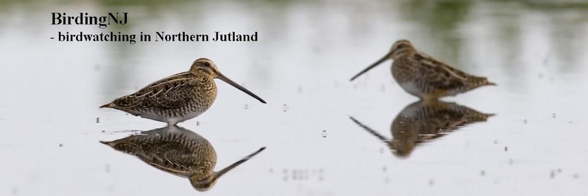 BirdingNJ