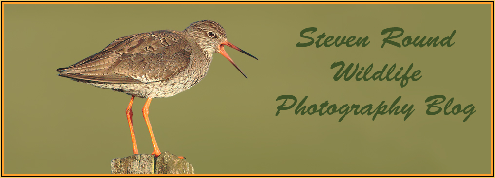Steve Round Wildlife Photography