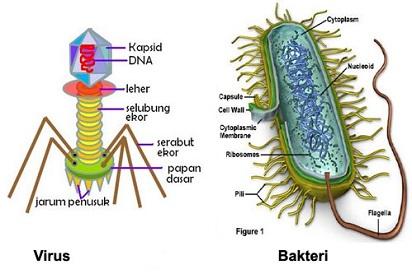 Hasil gambar untuk Virus dan Bakteri