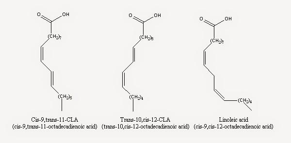 sprzężony kwas linolowy