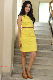 Rakul Preet Singh  Pictures in Yellow Dress at Rough Movie Logo Launch ~ Celebs Next