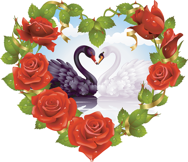 Black and White - Love Swans