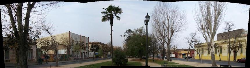 Arboricultura Urbana / Urban Arboriculture