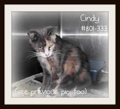 9/6/11 Liberty County AC Cats Foster Care Fund
