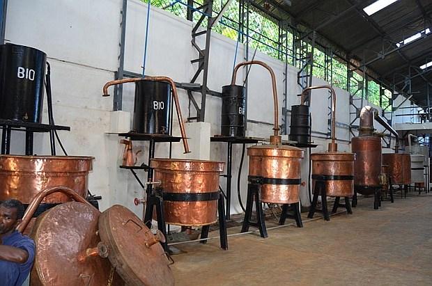 Produkcja olejku ylangowego na wyspie Nosy Be