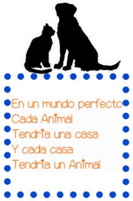 Spanish Quote Animals