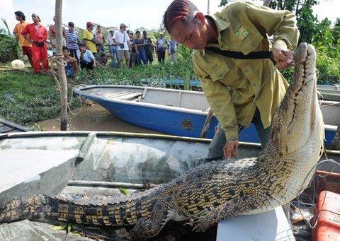 Ông Indet Sanabong và con cá sấu.