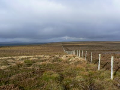 The fence running along the top of Dry Rigg is the only obvious feature in a sea of heather and grass