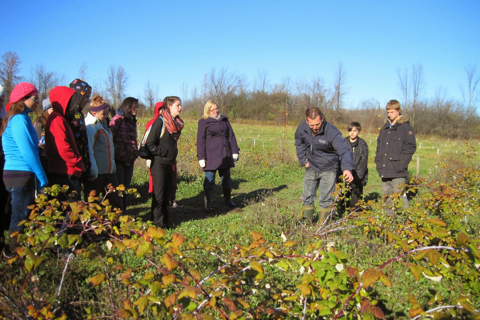 Bryan describes how black raspberries are cultivated, as well as how the canes (plants) flop over onto the soil and root.