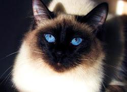 I Love Cats.