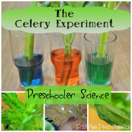 http://pisforpreschooler.weebly.com/1/post/2014/02/celery-science-experiment.html