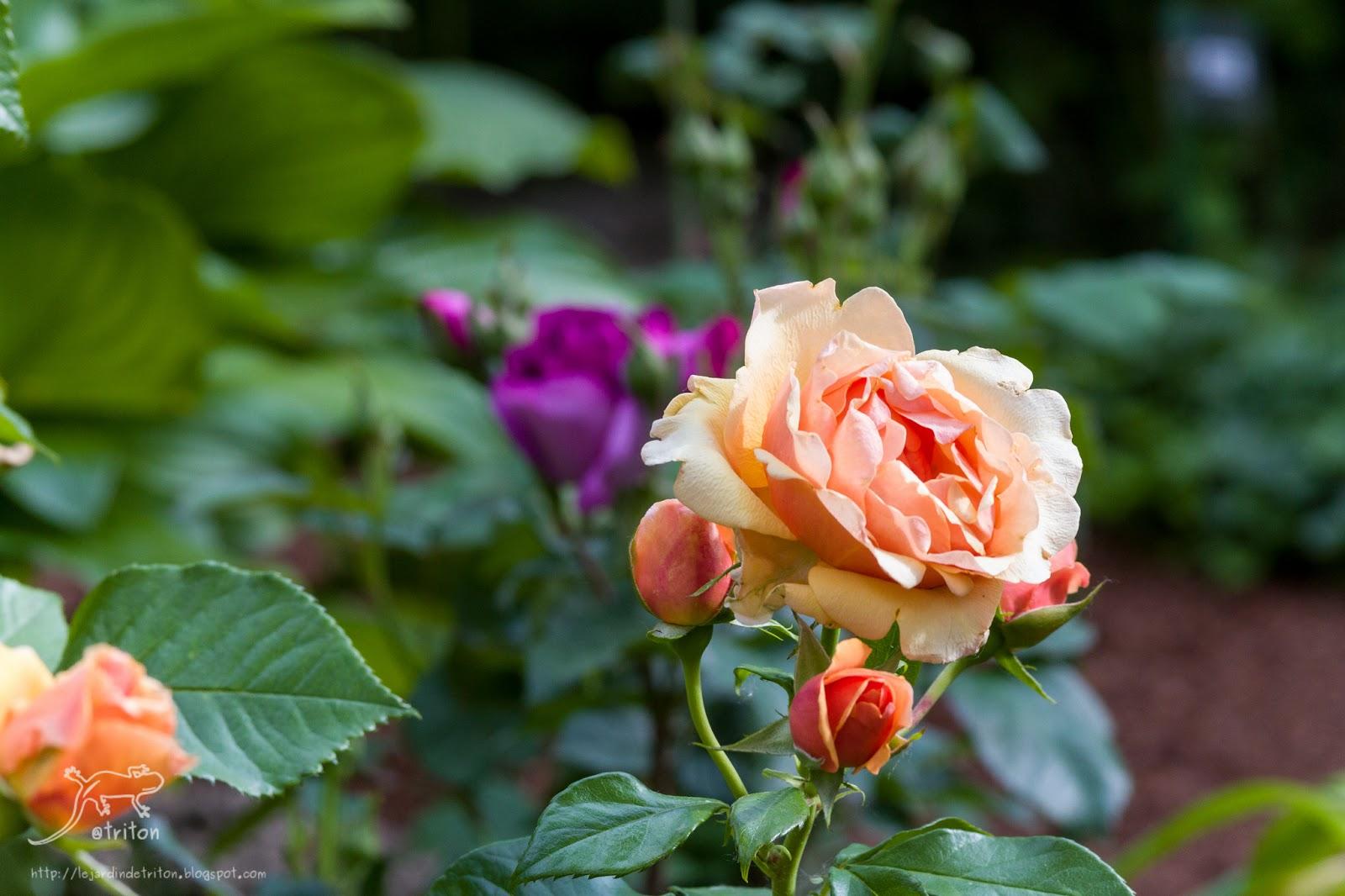 Le jardin de triton visite du jardin les aiguillons en for Jardin a visiter