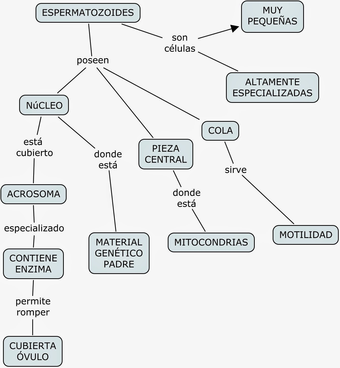 MAPAS CONCEPTUALES SISTEMA REPRODUCTOR MASCULINO/ CONCEPT MAP OF THE ...