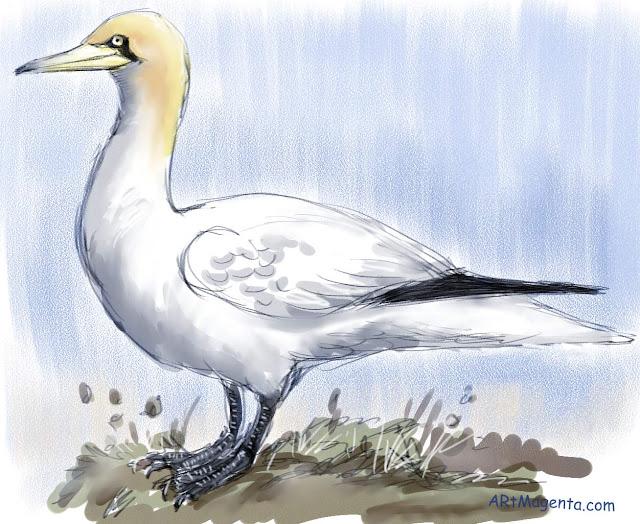 En fågelmålning av en havssula från Artmagentas svenska galleri om fåglar