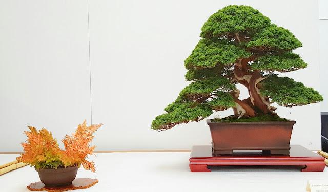 Maravilloso el equilibrio de esta escena de bonsai