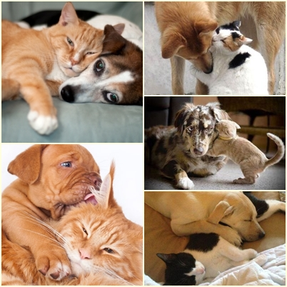 Kokoro: Essere come cane e gatto...?!