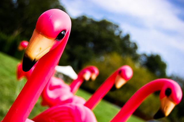 Plastic pink flamingos essay jennifer price