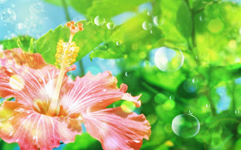 #12 Flowers Wallpaper