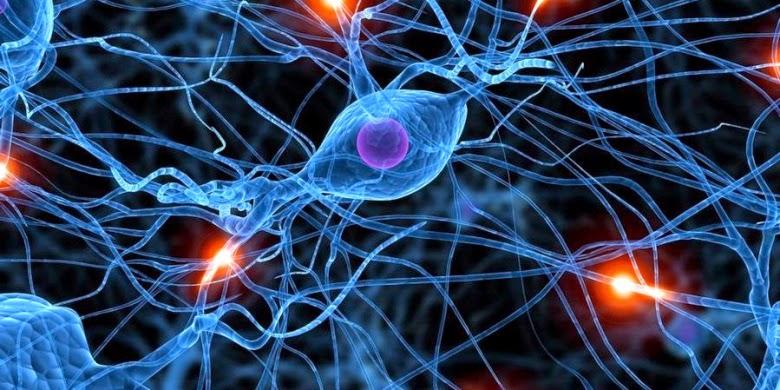 Fenomena Otak Manusia Yang Belum Terpecahkan