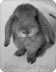 El conejo más listo de toda ciudad