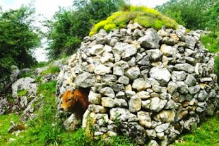 Vista de una vaca a la puerta de una de las cabañas de Los Fuexos