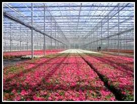 Floriculture net
