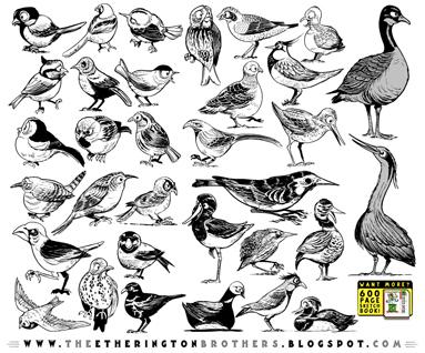 http://studioblinktwice.deviantart.com/art/33-Bird-Designs-538341499
