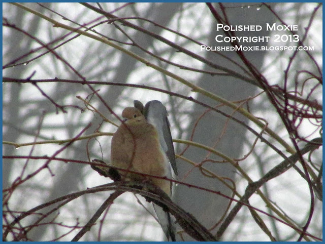 Picture of morning dove stretching its wings.