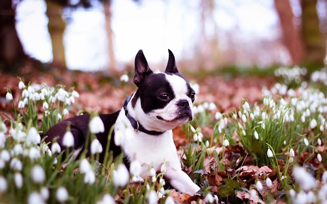 Perrito entre las Flores de Primavera