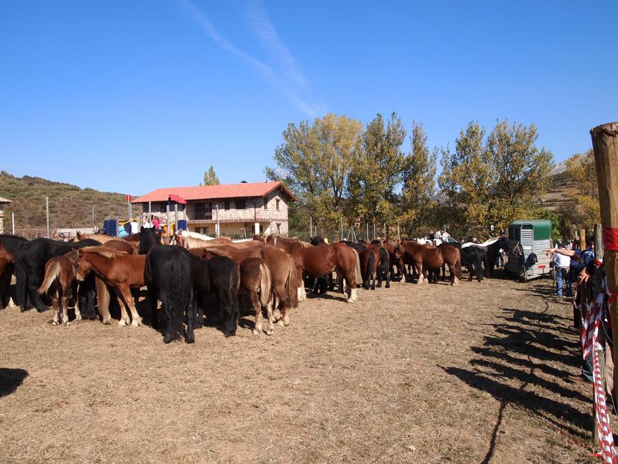 El valle de redondos feria del caballo - El valle de los caballos ...