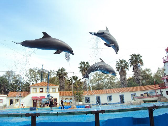 Dolphins in zoo