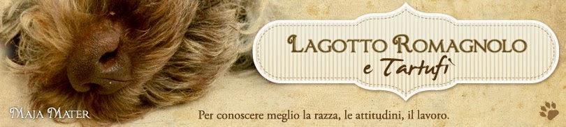 Lagotto Romagnolo e tartufi : Maja Mater