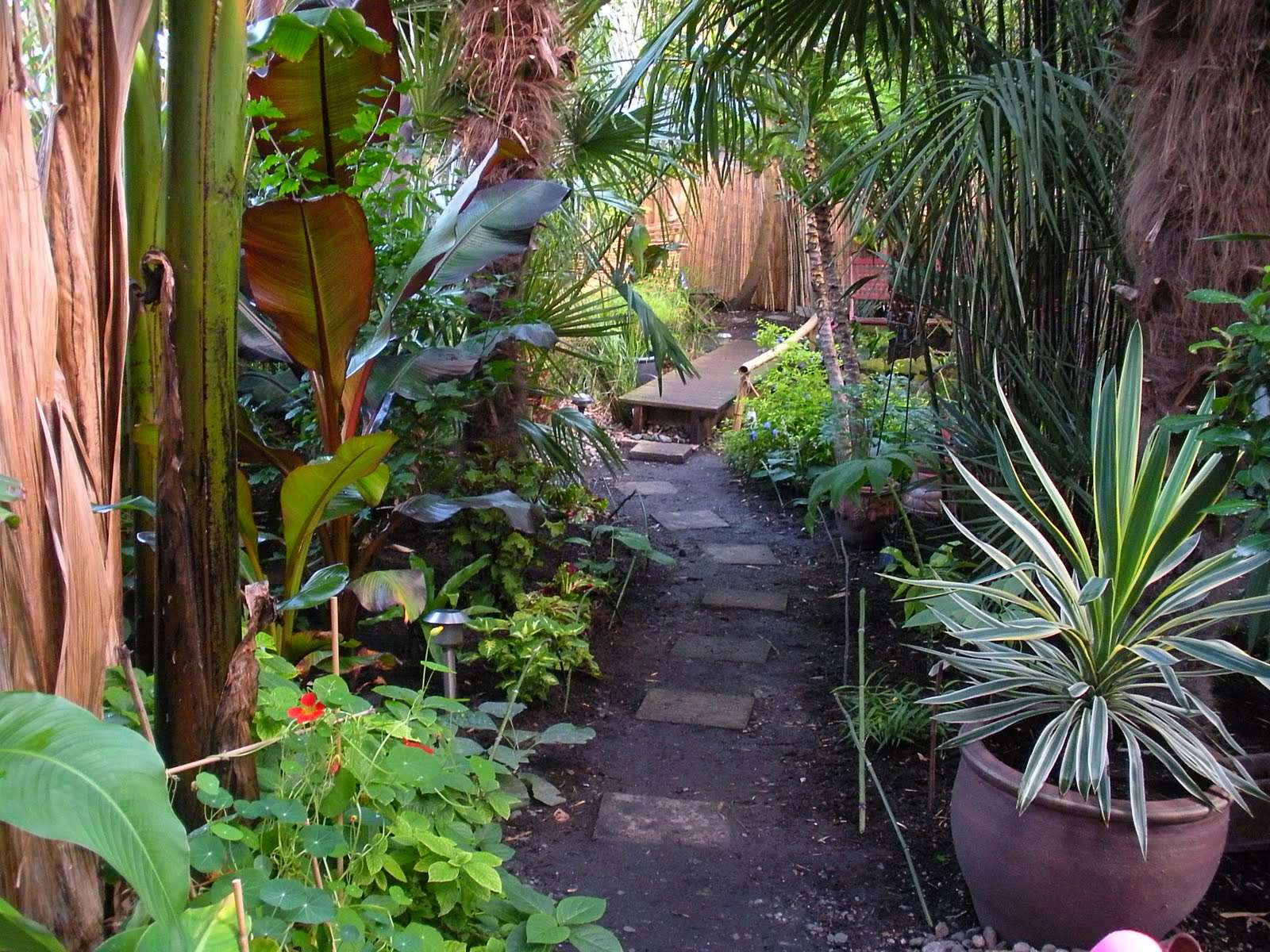 Victoria 39 S Backyard Going Totally Tropical In South London