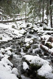 log bridge on the Crest Mountain Trail