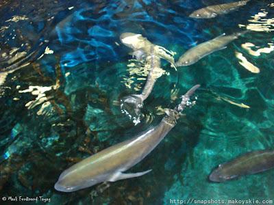 Siam Ocean World Glass Bottom Boat Ride Photo 5