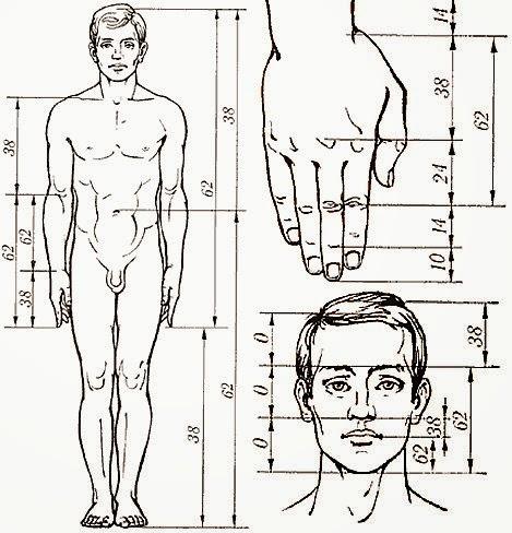 insan vücudu altın oran ile ilgili görsel sonucu