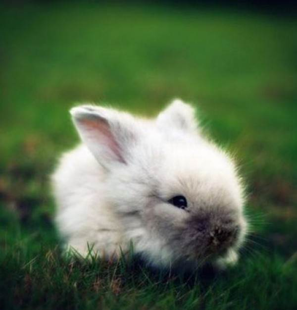 arnab-putih-cute
