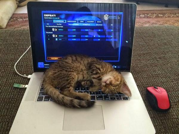 Kedi Kazanır :)