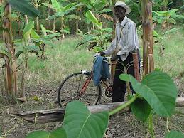 Campesino del norte del Cauca